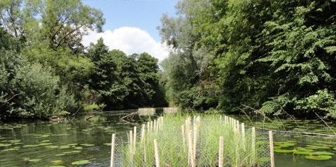Mise en place de radeaux végétalisés sur les noues et darses de Meuse