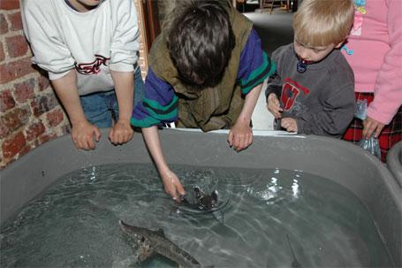 Bassin tactile Esturgeons - Pêche en Fête 2006 Ath
