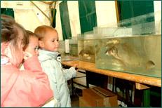Présentation des différentes espèces de poissons dans des aquariums