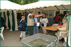 Remise à l'eau d'alevins de truite fario dans la Gette