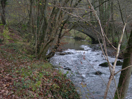 Rivière typique zone à truite