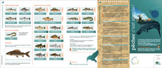 Brochure d'information relative à la législation sur la pêche en région wallonne
