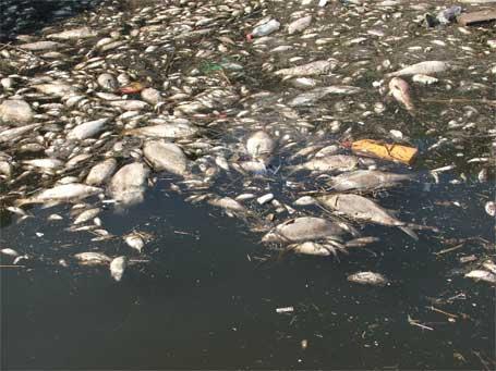 Fête du poisson SA0305-3