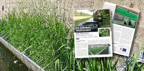 Article paru dans le Pêcheur belge de juillet 2013 sur les fascines végétalisées