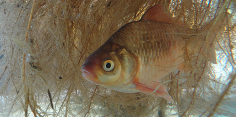Les racines peuvent offrir un abri aux poissons