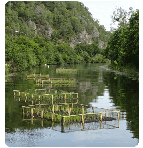 Radeaux définitifs installés sur une darse de la Basse Meuse