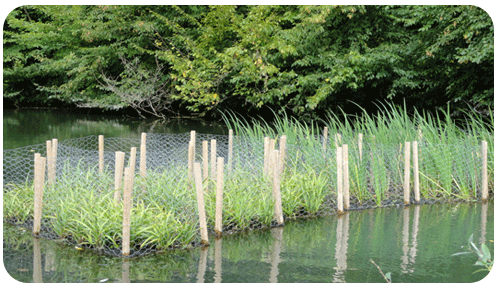 Chaine de petits radeaux végétalisés installés sur une noue de Meuse
