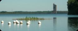 Lac de la Plate Taille - Radeaux végétalisés et frayères installées par la Maison wallonne de la pêche